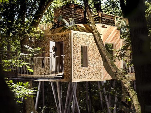 Ngôi nhà sang trọng này ở tây nam nước Anh là để cho thuê, có vòi hoa sen ngoài trời, lò sưởi bằng gỗ xoay và sàn gỗ riêng giữa các nhánh của cây sồi đại thụ. Ảnh: Mallinson