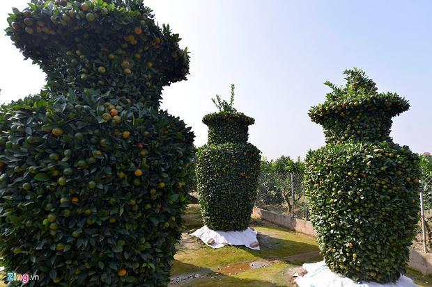 Hầu hết số gốc này được mua lại từ nơi khác (có tuổi thọ từ 5 đến 6 năm). Do thời gian tạo hình mất khá nhiều công nên không phải nhà vườn nào tại Văn Giang cũng có cây cảnh độc đáo như thế này.