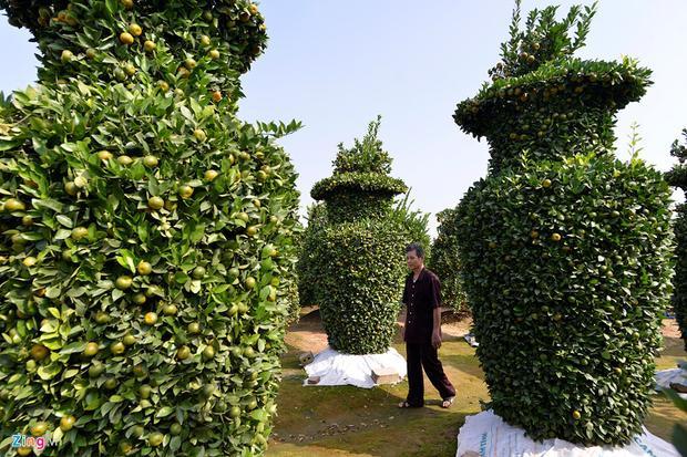 Giá của mỗi cây quýt hình lục bình này là 10 triệu đồng. Tuy nhiên, thương lái có thể sẽ bán giá cao hơn, lên tới gần 20 triệu đồng/gốc.