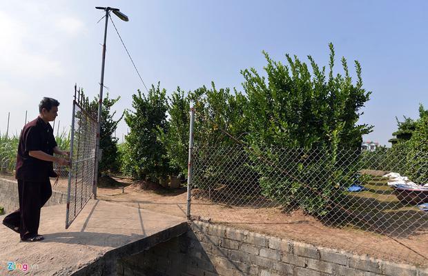 Nếu đắt hàng năm nay, năm sau, ông Thành và gia đình sẽ mua lại hàng loạt gốc quýt nhiều năm tuổi để uốn nắn, tỉa thành những thế cây lạ và phục vụ các mùa Tết năm sau.