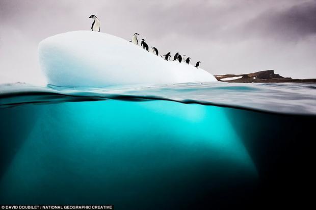 Nam Cực: Tại đảo Nam Georgia ở Nam Cực, những con chim cánh cụt Gentoo thường xếp hàng dài trên băng. Hành trình du thuyền mùa đông đến hòn đảo này sẽ rất thú vị, khi du khách được ngắm nhìn những đàn chim cánh cụt di chuyển trên băng và khám phá các loài động vật khác ở vùng cực.