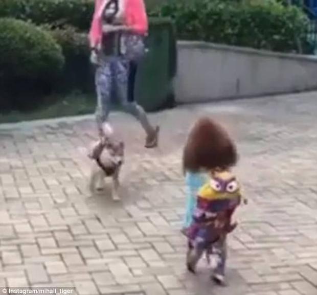 Ăn mặc như thế này ai nghĩ rằng đây là một chú chó.