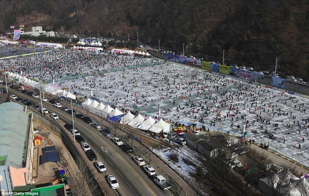 Có khoảng 170 tấn cá hồi được thả xuống sông Hwacheon đóng băng trong mùa lễ hội.