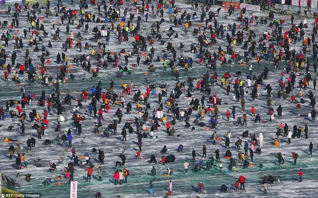 Dự kiến có khoảng 1 triệu người tham gia lễ hội năm nay, và khoảng 21.000 lỗ được tạo ra trên bề mặt đóng băng của sông Hwacheon.