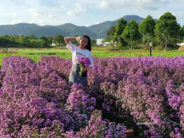 Theo chị Lượm (quê Ninh Bình), hoa trồng ngoài mục đích để cho các bạn trẻ chụp hình còn được bán cho thương lái. Tùy theo thời điểm, chị có thể bán từ 30.000 đồng trở lên cho một ký hoa.