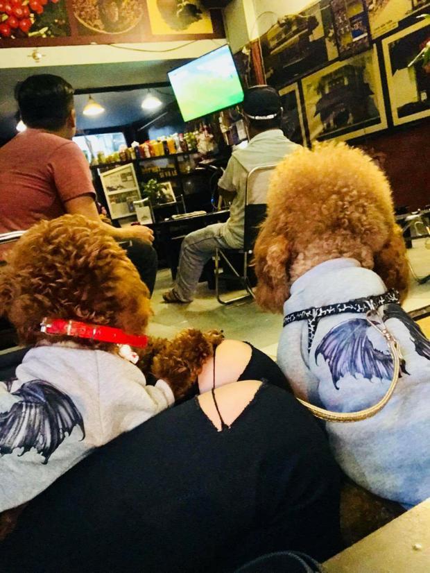 Hai chú chó đáng yêu tập trung theo dõi U23 Việt Nam thi đấu.