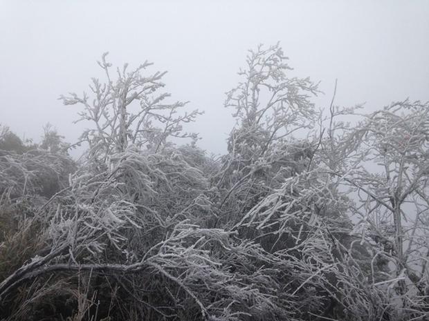 Cận cảnh băng giá phủ trắng đỉnh Mẫu Sơn trong tiết trời rét -1,4 độ C