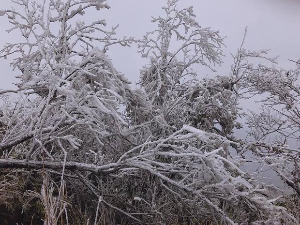 Băng tuyết bao phủ đỉnh Mẫu Sơn, giới trẻ tận dụng cơ hội check-in ảnh đẹp