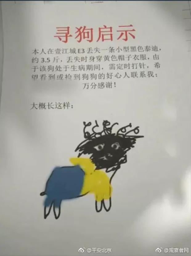 Thông báo tìm chú chó cũng như ảnh minh họa của nó.