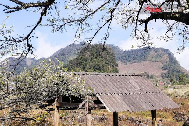 Việt Nam mảnh đất hình chữ S với muôn vàn cảnh đẹp nhưng cứ đến độ cuối tháng Chạp, người dân tứ xứ lại rủ nhau kéo về bản làng ở Mộc Châu để ngắm một mùa hoa mận nữa lại tới.
