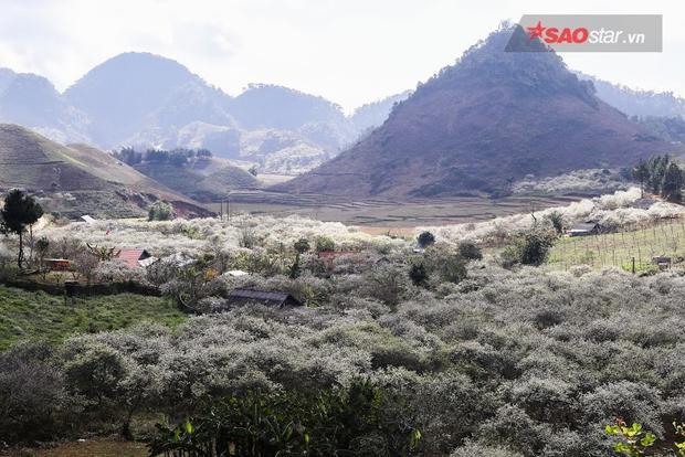 Bản làng thấp thoáng giữa đồi mận trắng xóa.