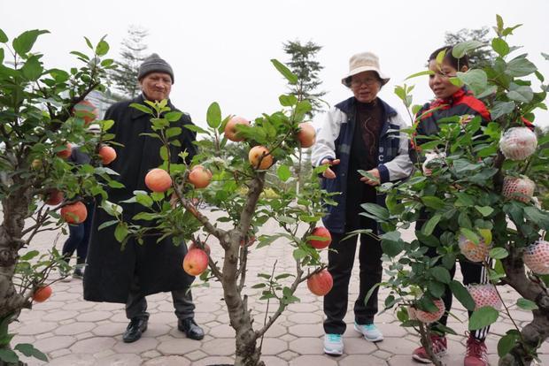 Nhiều người dân nhìn ngắm táo bonsai Trung Quốc.