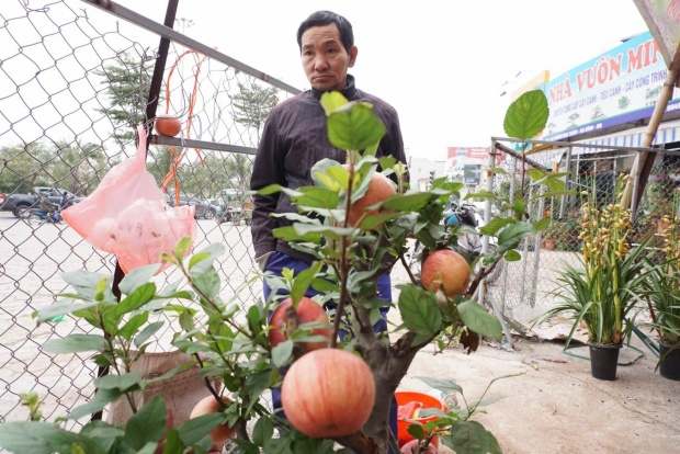 Một số người dân nhìn ngắm loài cây lần đầu tiên được bày bán dịp Tết.
