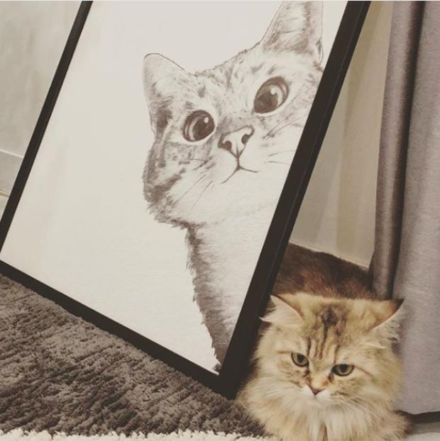 Bé mèo Bông Hoa đáng yêu của Tiên Cookie.