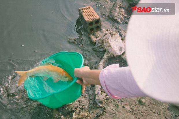 Những chú cá vàng có lẽ khá mệt mỏi khi cứ được thả ra rồi lại bị bắt vào.