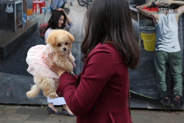 Những chú chó cũng được chủ nhân khoác lên mình bộ váy mới.