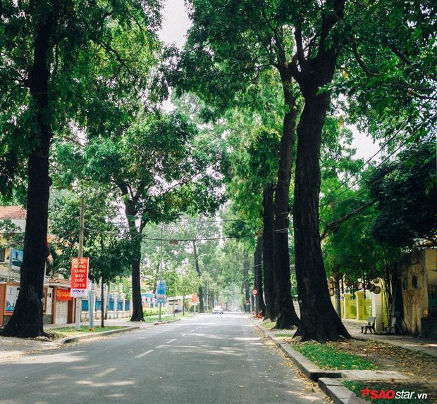 Lâu lắm rồi người ta mới thấy được những cung đường vắng lặng, tràn ngập màu xanh như đường Tú Xương ngày hôm nay.