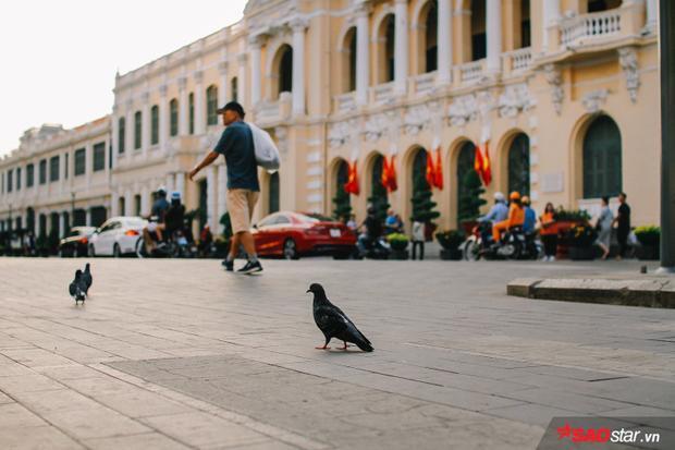 Đàn bồ câu trên đường Lê Thánh Tôn.