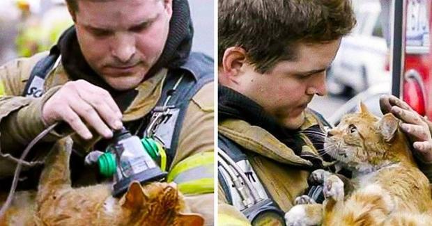 Nhân viên cứu hỏa đã cứu sống chú mèo nhỏ bằng cách cho nó dùng mặt nạ oxy.