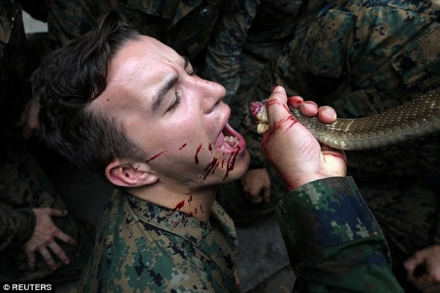 Ngày 19/2, trong khuôn khổ cuộc tập trận Hổ mang Vàng năm nay (từ 13-23/2), bài diễn tập sinh tồn trong rừng sâu dành cho các binh sĩ thủy quân lục chiến Mỹ, Thái Lan và các nước đồng minh được tổ chức tại căn cứ hải quân của Thái Lan ở tỉnh Chonburi.
