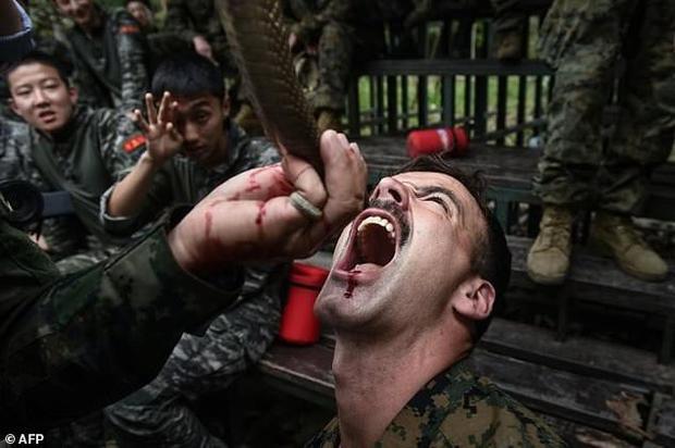 Các lính thủy đánh bộ học cách chế biến và ăn một con tắc kè. Họ cũng được dạy cách tìm nước trong rừng rậm và xác định cây nào có thể tận dụng làm thức ăn. Khoảng 11.075 binh sĩ từ 29 quốc gia bao gồm Mỹ, Thái Lan, Indonesia, Nhật Bản, Malaysia, Hàn Quốc và Singapore tham gia cuộc tập trận Hổ mang Vàng năm nay. Trong ảnh, binh sĩthay phiên nhau uống máu rắn hổ mang trước khi nướng chín và ăn chúng ngay tại chỗ.