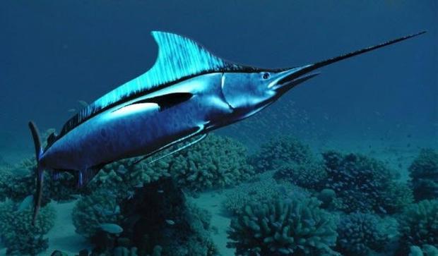 Cô gái kém may mắn bị cá kiếm tấn không khi đi bơi ở biển.