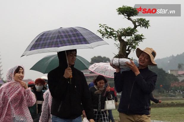 Cây sung cảnh được anh Nguyễn Xuân Khánh (quê Hà Nam) vác trên vai được mua với giá 640 nghìn đồng.