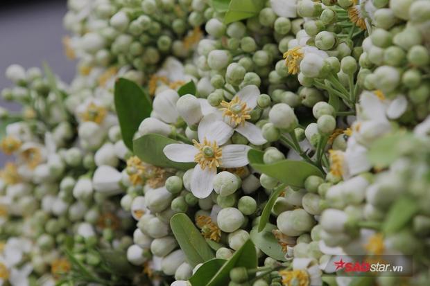 Trong số nhiều loại hoa, đây được xem là loài hoa tuyệt vời nhất nhì của Thủ đô mỗi dịp tiết trời giao nhau Đông - Xuân.
