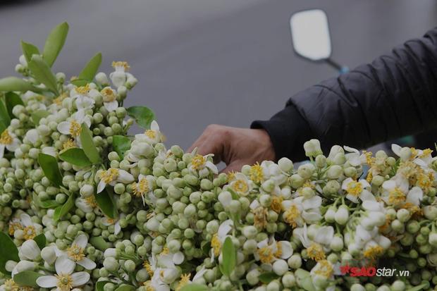 Mùa hoa bưởi không quá dài, mỗi năm chỉ có 1 lần. Những ngày mùa xuân mây trời ẩm thấp, chợt có lúc nào đi ngang hàng hoa bưởi, bạn hãy thử hít một hơi thật sâu và cảm nhận mùi hương của nó. Chắc chắn đó sẽ là mùi hương dễ chịu, ấm áp và đầy chất xuân nhất mà ai nây đều muốn lưu giữ mãi để nhớ về những ngày đầu năm.