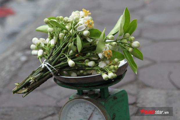 Đây là loại hoa duy nhất được bán theo lạng.
