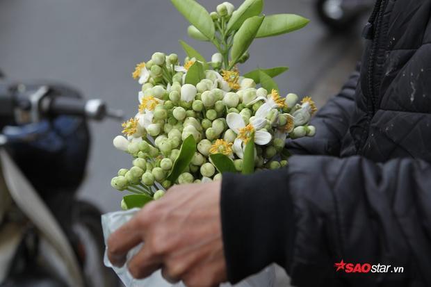 Loài hoa này ưu ái đặc biệt nở vào mùa xuân.