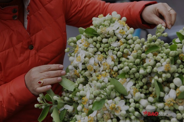 Mùi hương hoa bưởi như lưu giữ cả mùa xuân, thơm ngát và rất nồng ấm.