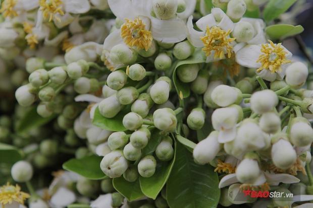 Nhụy hoa vàng rực chen lẫn những búp nụ chưa kịp nở xòe.