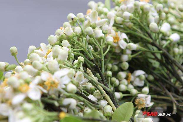 Loài hoa dân dã gắn liền với mùa xuân.