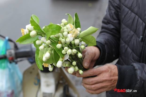 Hoa được ngắt theo cả cành kèm lá xanh mơn mởn.