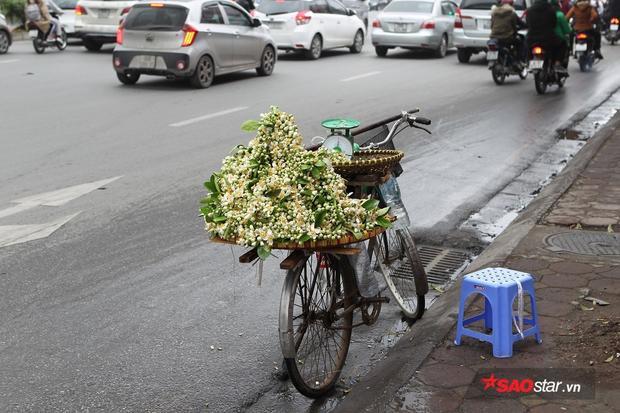 Đến mùa hoa, những xe đạp cũ kỹ, cọc cạch của người dân ngoại thành lại chở theo những cánh hoa trắng muốt, thơm nức về từng ngõ phố.