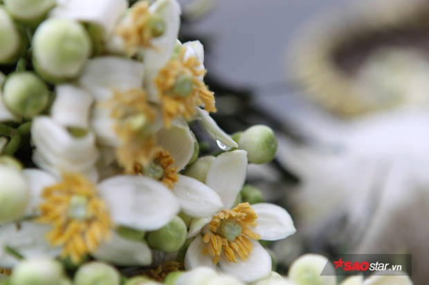 Vẻ đẹp tinh khôi của loài hoa tháng 3.