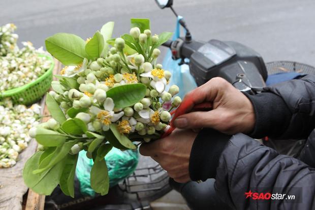 Giữa những ngày mưa phùn tí tã, có một niềm vui mang tên mùa hoa bưởi thơm từng cơn gió