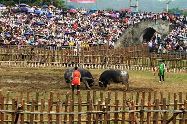 Mở cửa miễn phí, lễ hội chọi trâu thu hút rất đông người xem.