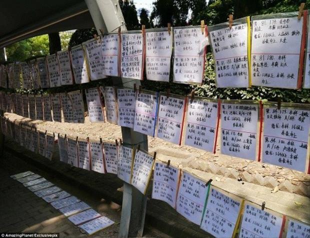 Những tờ sơ yếu lý lịch được treo ở khắp nơi.