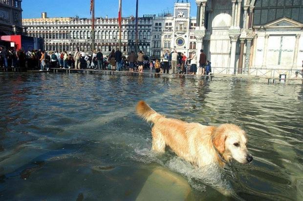 Hy vọng khi nước về, Venice sẽ sớm trở lại phong độ ngày xưa, giống như trong bức ảnh này.