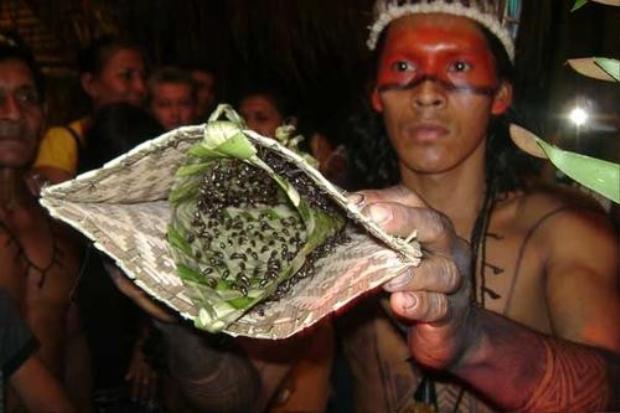 Các chàng trai của bộ lạc Satere-Mawe phải trải qua nghi lễ trưởng thành khá đau đớn khi phải chịu hàng trăm con kiến đạn đốt trong vòng 10 phút. Ảnh: garfors