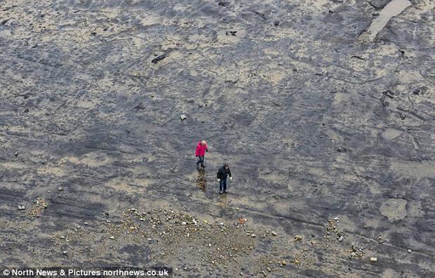 Khu rừng trên được nhận định bắt đầu hình thành từ Thời kỳ đồ đá giữa (Mesoliths), thời điểm con người bắt đầu biết săn bắn. Ảnh: Mirror
