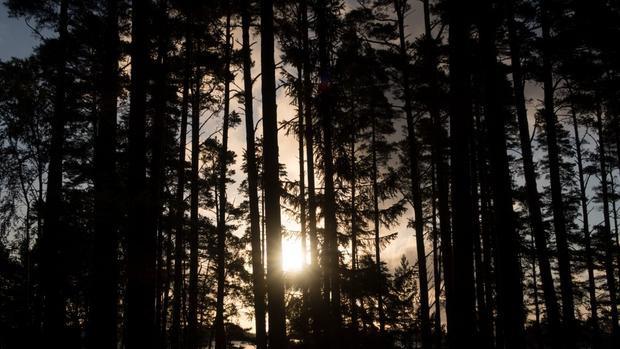 Khung cảnh thiên nhiên hoang dã với những rừng cây xanh mướt