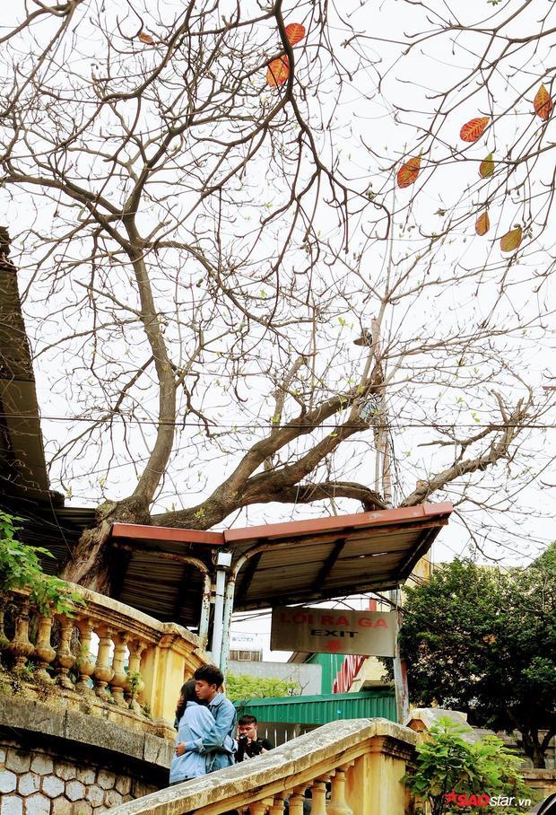 Trên cây cao chỉ còn lác đác vài chiếc lá. Khung cảnh lãng mạn ngỡ như những ngày cuối thu đầu đông.