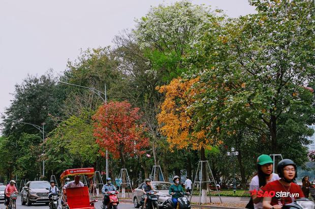 Phố đổi màu ở Hà Nội.
