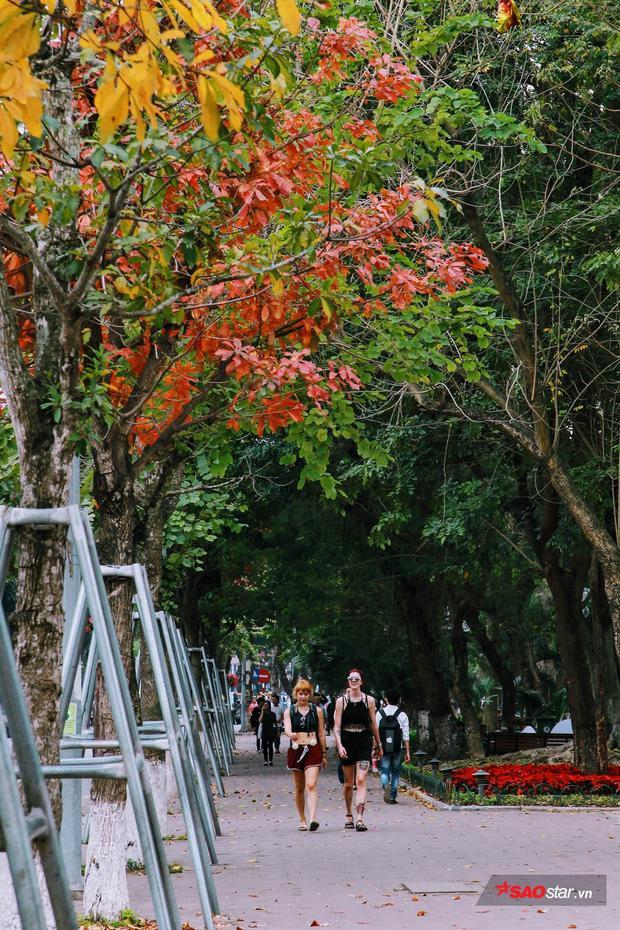 Con đường lá đỏ đẹp như ở Hàn Quốc tại bờ hồ Hoàn Kiếm.