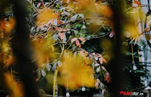 …Đây có lẽ là quãng thời gian thời tiết đỏng đảnh nhưng mọi thứ cũng đẹp đẽ và nên thơ nhất trong năm.