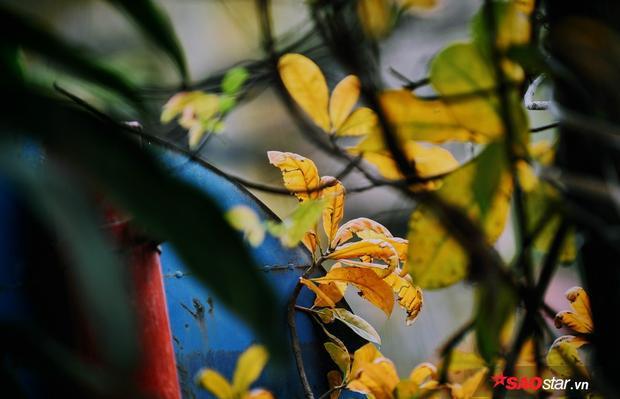 Cận cảnh những chiếc lá úa mùa xuân.