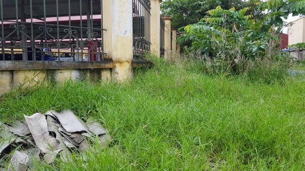 Bên ngoài tường rào cỏ mọc um tùm.